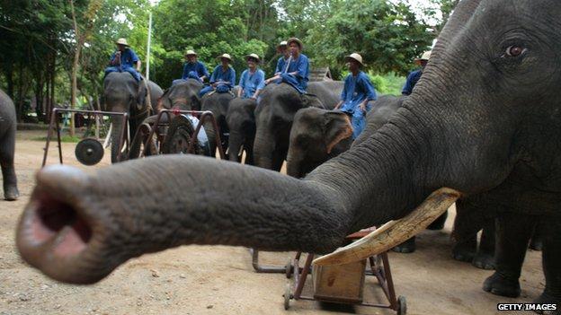 elephantOrchestra