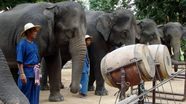 elephantOrchestra2